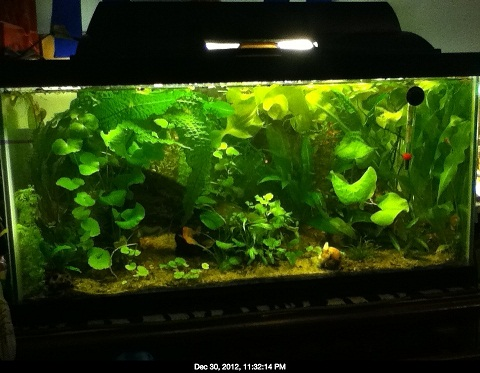 Name:  15 rescape dec 30.jpg