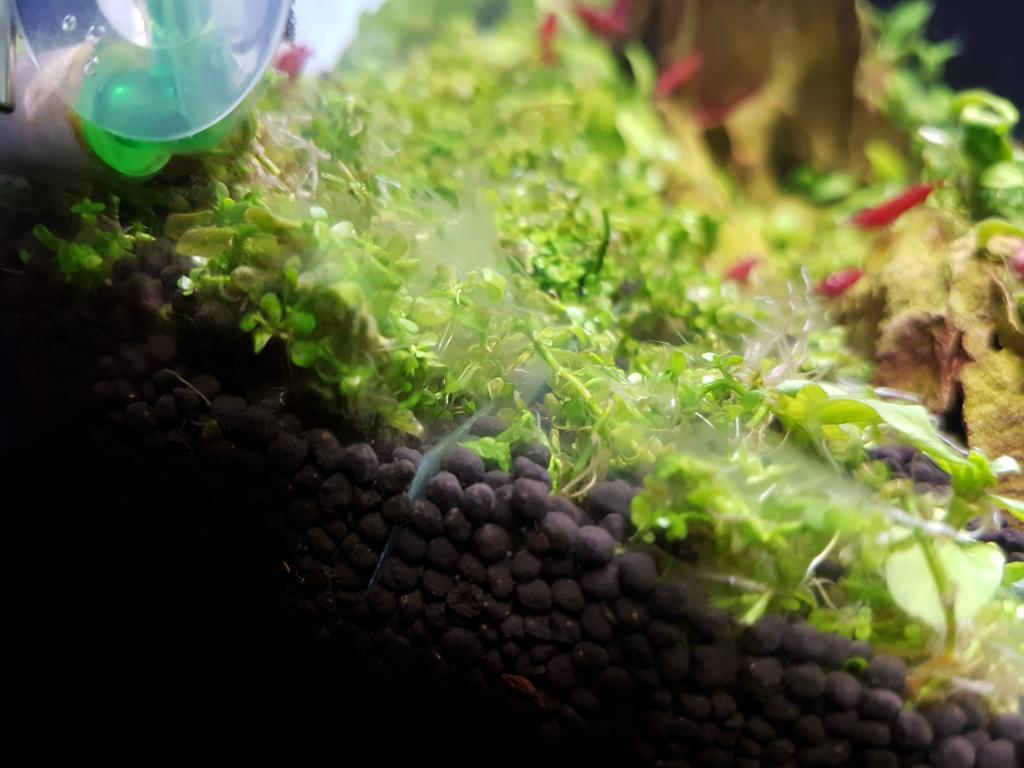Aquarium white fungus 1000 aquarium ideas for Growing plants with fish