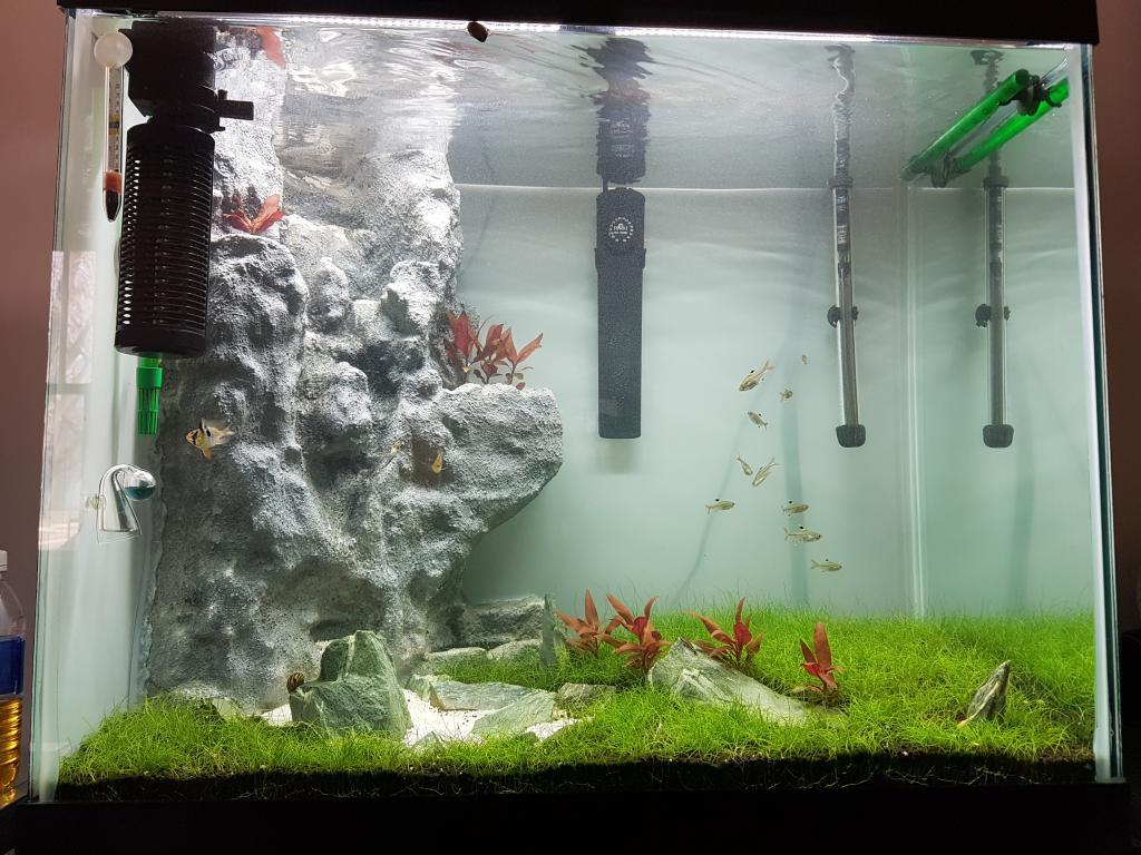 Sand waterfall aquarium 1000 aquarium ideas for Small fish tank with waterfall