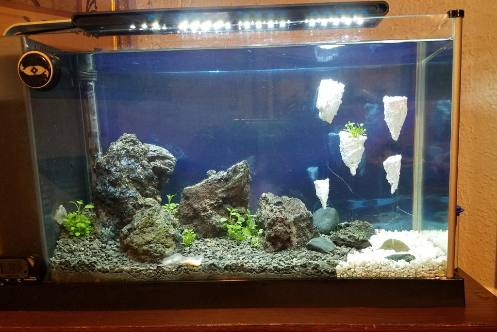safe paint for use inside the aquarium the planted tank forum