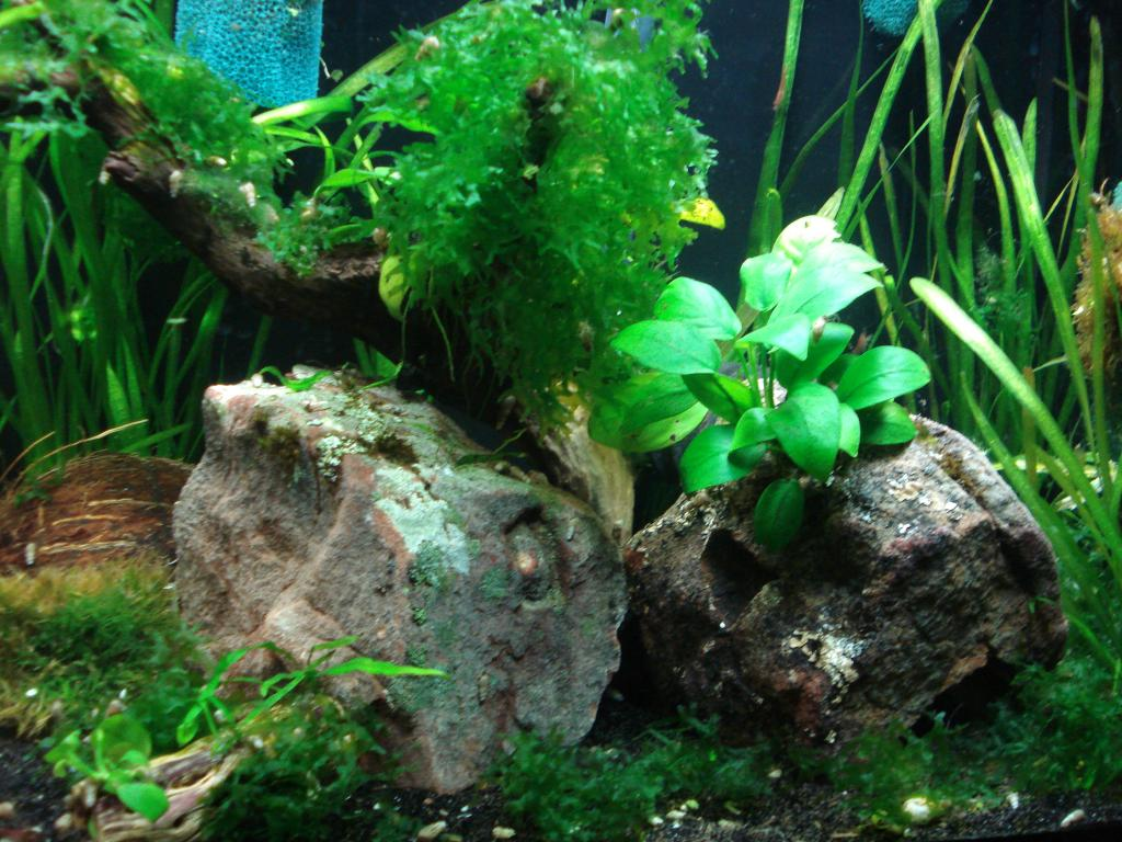 Click image for larger version  Name:29-55 gallon 003.jpg Views:57 Size:138.5 KB ID:145738