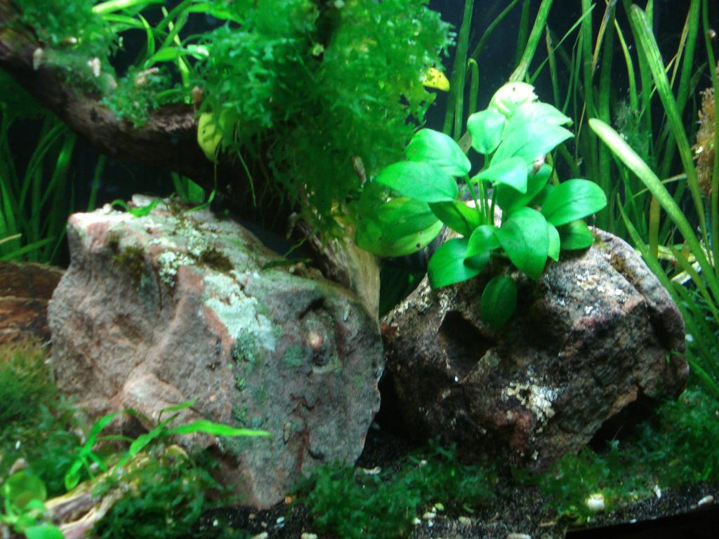 Click image for larger version  Name:29-55 gallon 005.jpg Views:54 Size:124.4 KB ID:145754