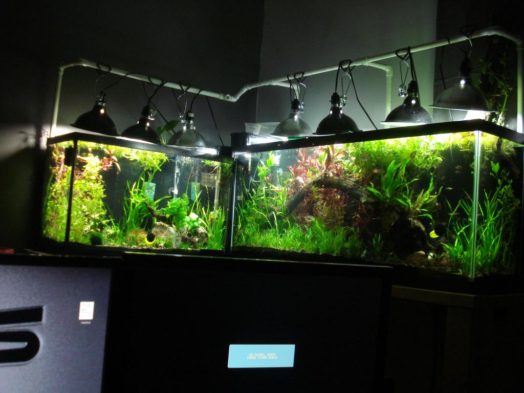 Click image for larger version  Name:29-55 gallon 027.jpg Views:134 Size:96.2 KB ID:145786