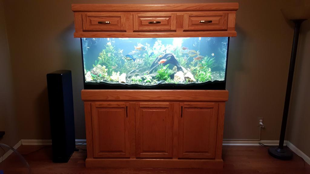 Click image for larger version  Name:8 full tank.jpg Views:105 Size:53.4 KB ID:704658