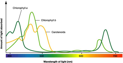 Name:  Absorbtion Spectra.jpg Views: 100929 Size:  75.0 KB