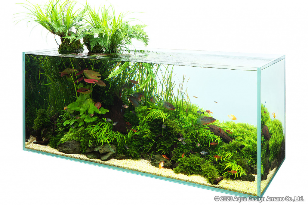 Click image for larger version  Name:ADA Nature in the Glass - Daisuke Inoue.jpg Views:12 Size:418.0 KB ID:901485