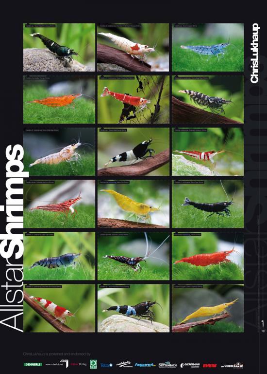 Click image for larger version  Name:AllStar-ShrimpPoster resized.jpg Views:320 Size:70.4 KB ID:123882