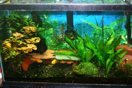 Name:  Aquarium 010.jpg Views: 127 Size:  46.0 KB