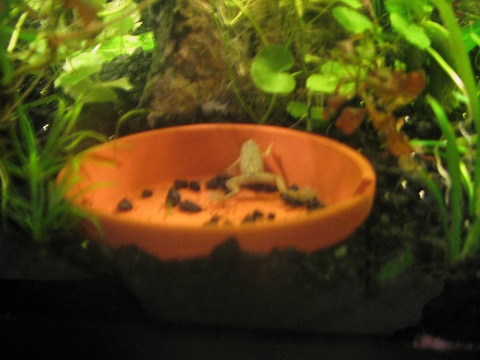 Name:  bedside frog in a dish 1.jpg