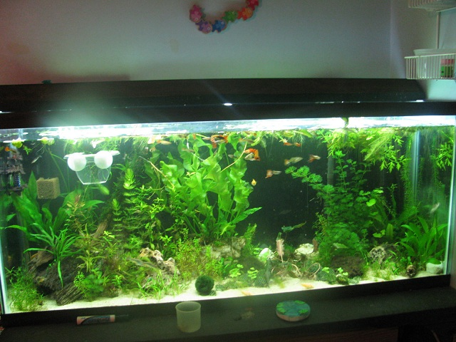 Click image for larger version  Name:big tank fts w.o flash.jpg Views:258 Size:136.7 KB ID:74114