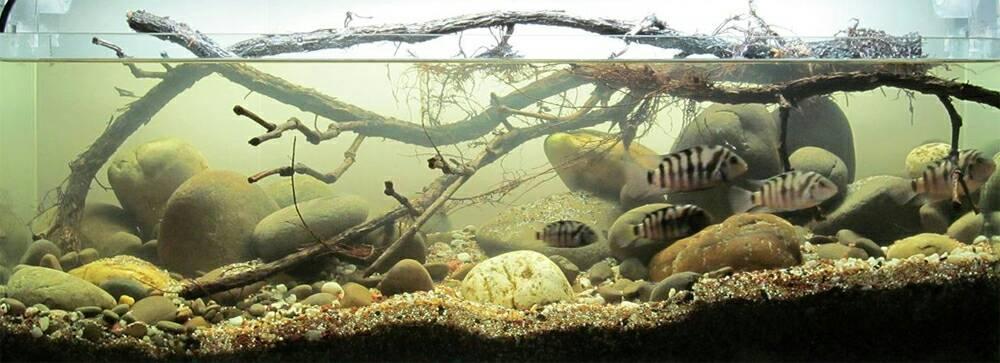 Click image for larger version  Name:biotope-aquarium-c2013105-3.jpg Views:20 Size:65.7 KB ID:764593