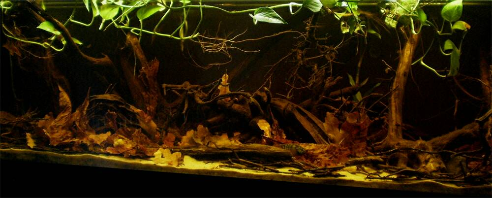 Click image for larger version  Name:biotope-aquarium-c2013_45-1.jpg Views:23 Size:61.4 KB ID:764585
