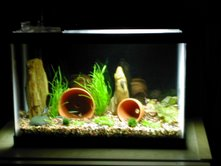 Name:  Coralife Mini Freshwater.jpg Views: 471 Size:  8.3 KB