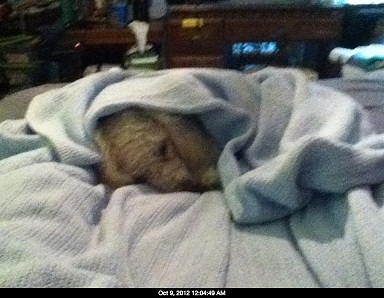 Name:  Doddle in a blanket.jpg Views: 936 Size:  57.3 KB