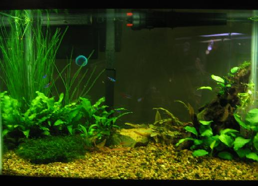 Name:  fish 002.jpg Views: 527 Size:  43.6 KB