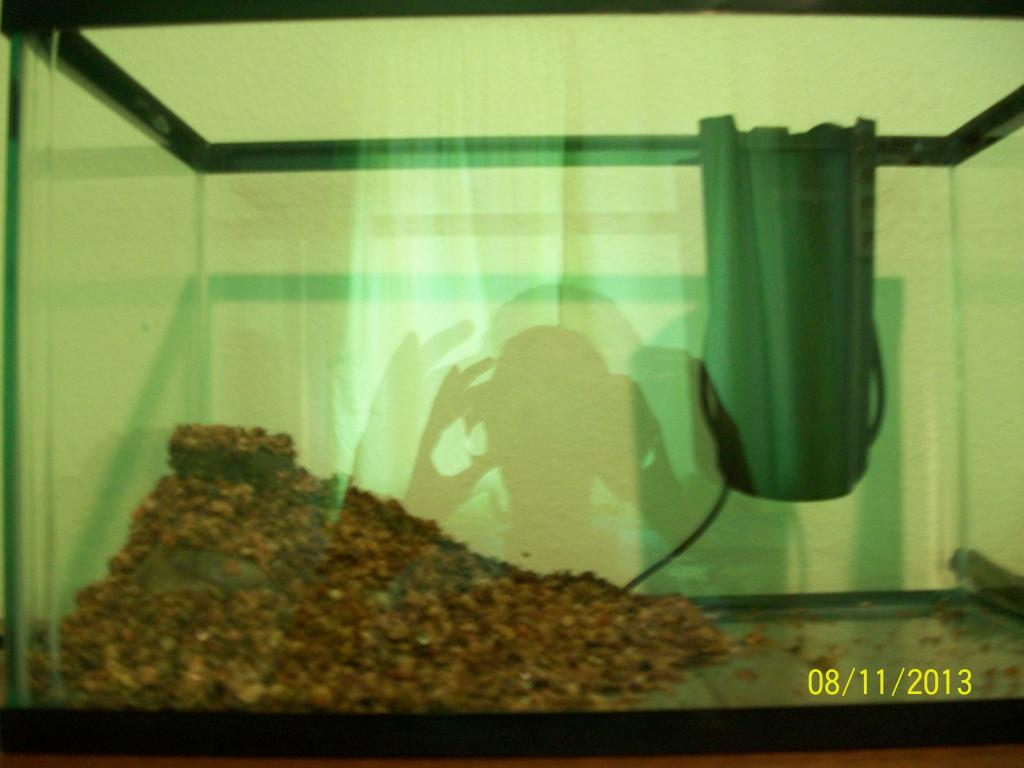 Click image for larger version  Name:Fish tank 041.jpg Views:158 Size:60.9 KB ID:190170