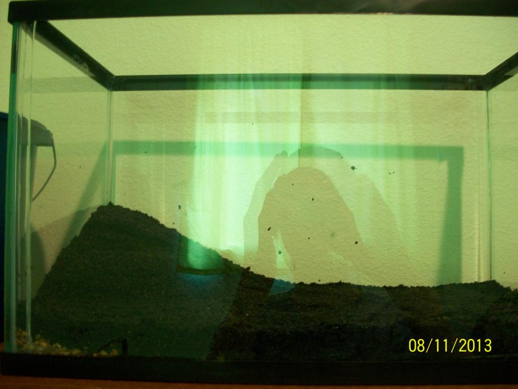 Click image for larger version  Name:Fish tank 043.jpg Views:52 Size:70.8 KB ID:190202