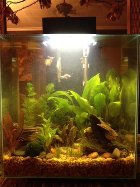 Name:  Fluval replanted 2.jpeg Views: 2061 Size:  36.0 KB