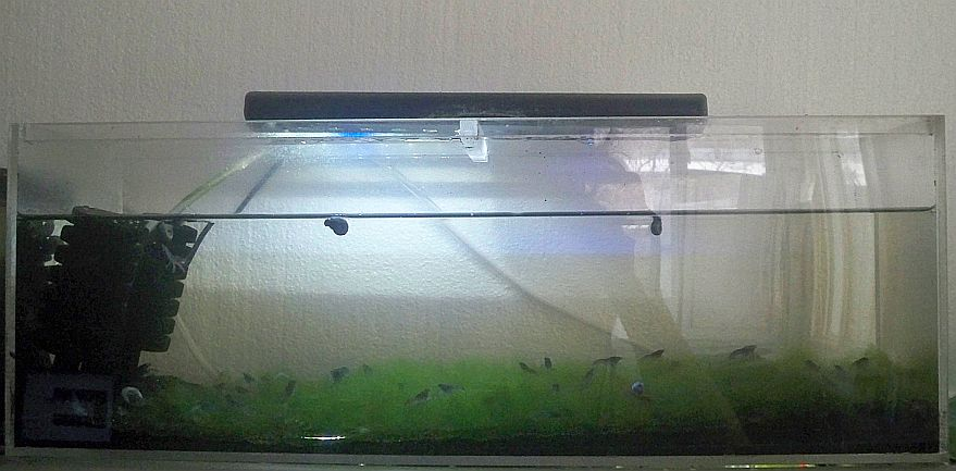 Click image for larger version  Name:full marmokrebs tank.jpg Views:54 Size:79.2 KB ID:259425