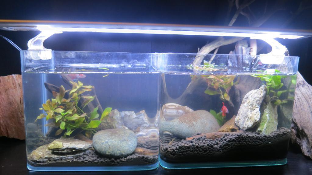 Koi betta aquascape tanks the planted tank forum for Koi tank size
