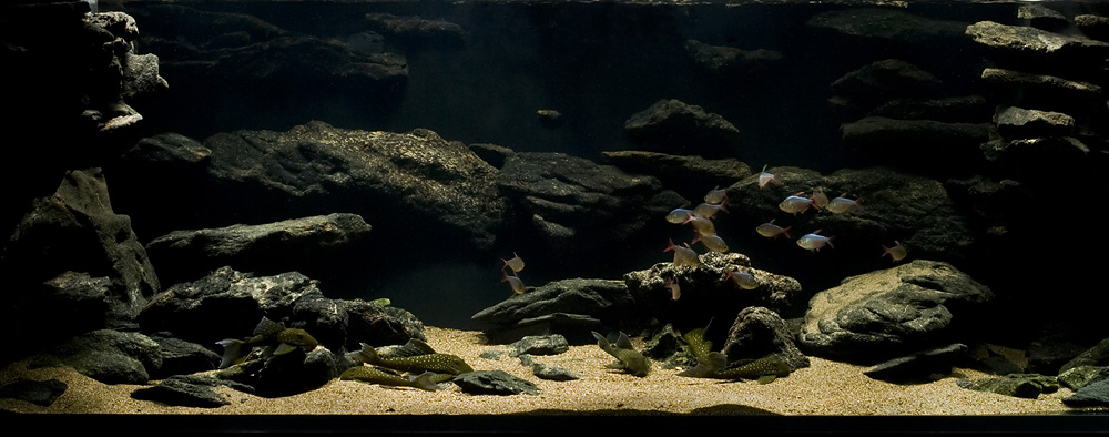Plantless Aquascapes Page 3 The Planted Tank Forum