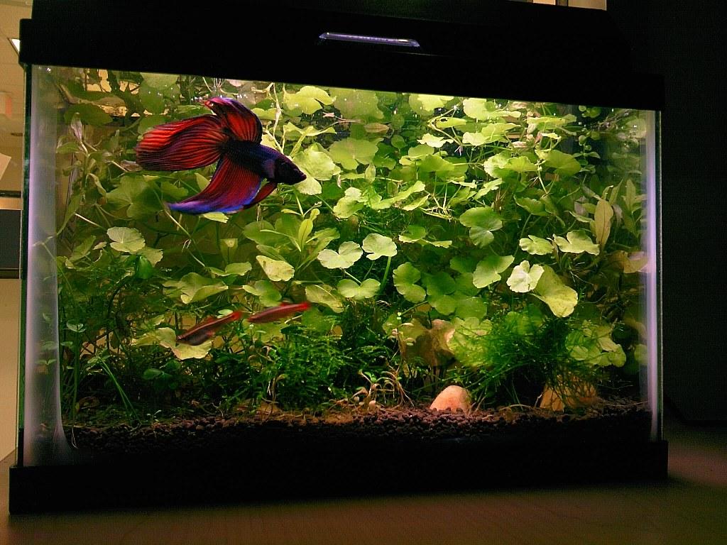 Aquarium fish tank hoods - Http Www Plantedtank Net Forums At 0 D 1242064545