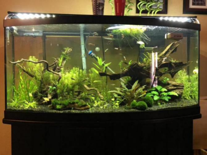 Choosing a light - The Planted Tank Forum