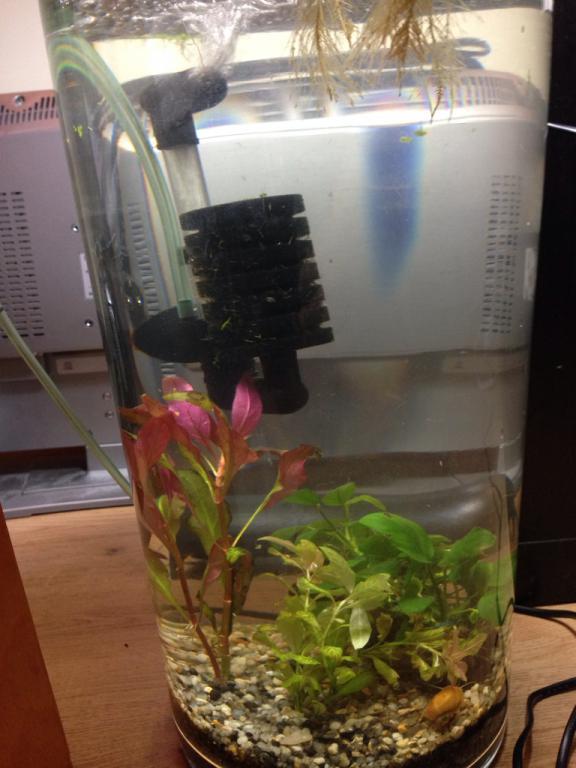 Planted Vase Ikea Bladet The Planted Tank Forum