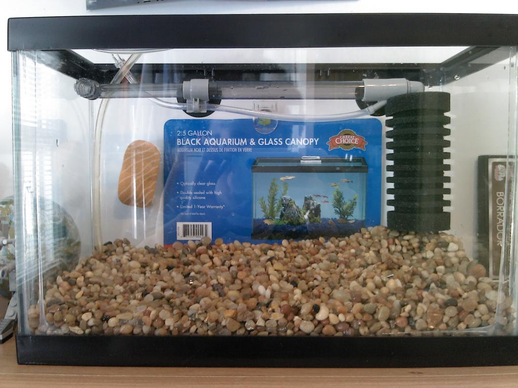 2 5 gallon glass aquarium 1000 aquarium ideas for 2 gallon fish tank