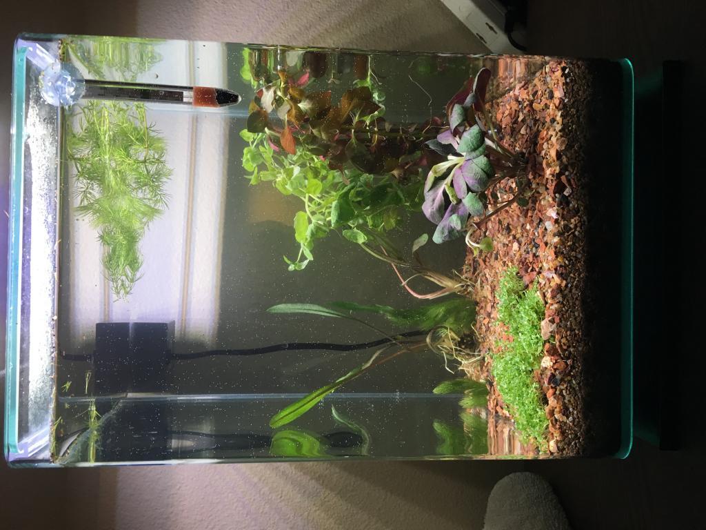 5g walstad method tank high nitrites nitrates the planted tank