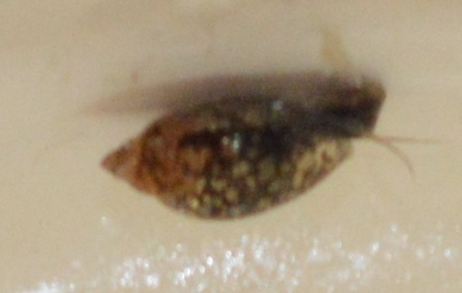 Name:  lice.jpg Views: 472 Size:  31.0 KB