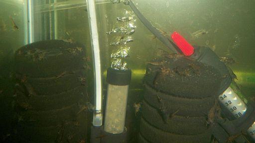 Name:  Malawa sponge filter.jpg Views: 423 Size:  39.4 KB