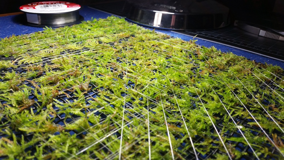 Click image for larger version  Name:moss wall 0.jpg Views:140 Size:311.2 KB ID:652081