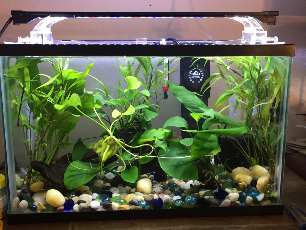 Click image for larger version  Name:new tank1.jpg Views:108 Size:120.2 KB ID:556617