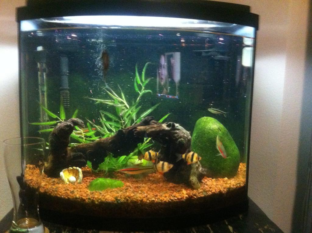 26 gallon bow front aquarium 1000 aquarium ideas for Bow front fish tank