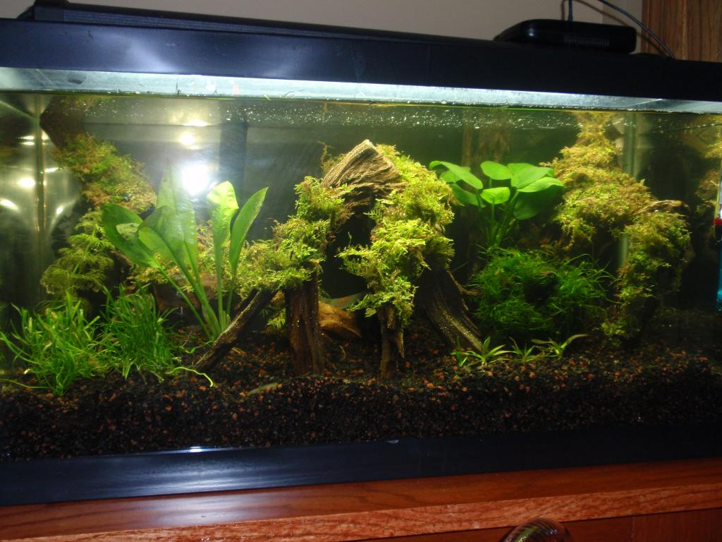 havent decided on stocking yet but am looking for ideas. I want to ...