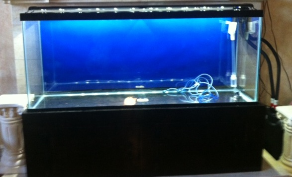Marineland led aquarium light 1000 aquarium ideas marineland led double bright 48 light for 55gallon the planted mozeypictures Image collections
