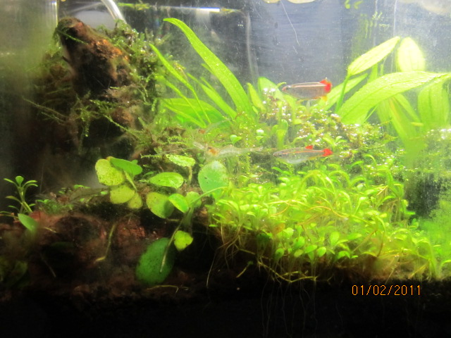 Click image for larger version  Name:plant tank 003.JPG Views:108 Size:126.7 KB ID:26294