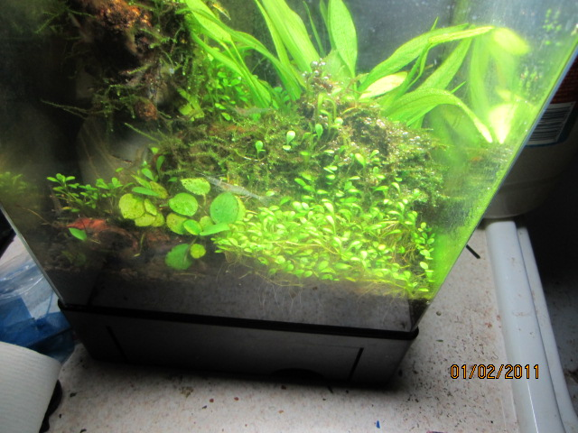 Click image for larger version  Name:plant tank 011.JPG Views:308 Size:132.8 KB ID:26291