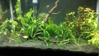 Name:  Planted tank 2nd pic.jpg