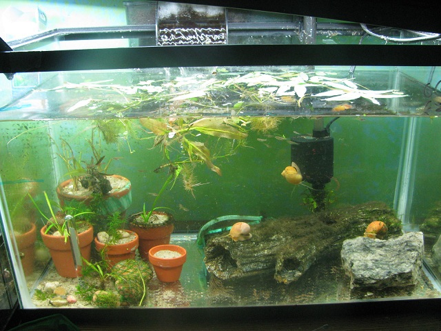 Click image for larger version  Name:ry tank.jpg Views:941 Size:149.2 KB ID:75490
