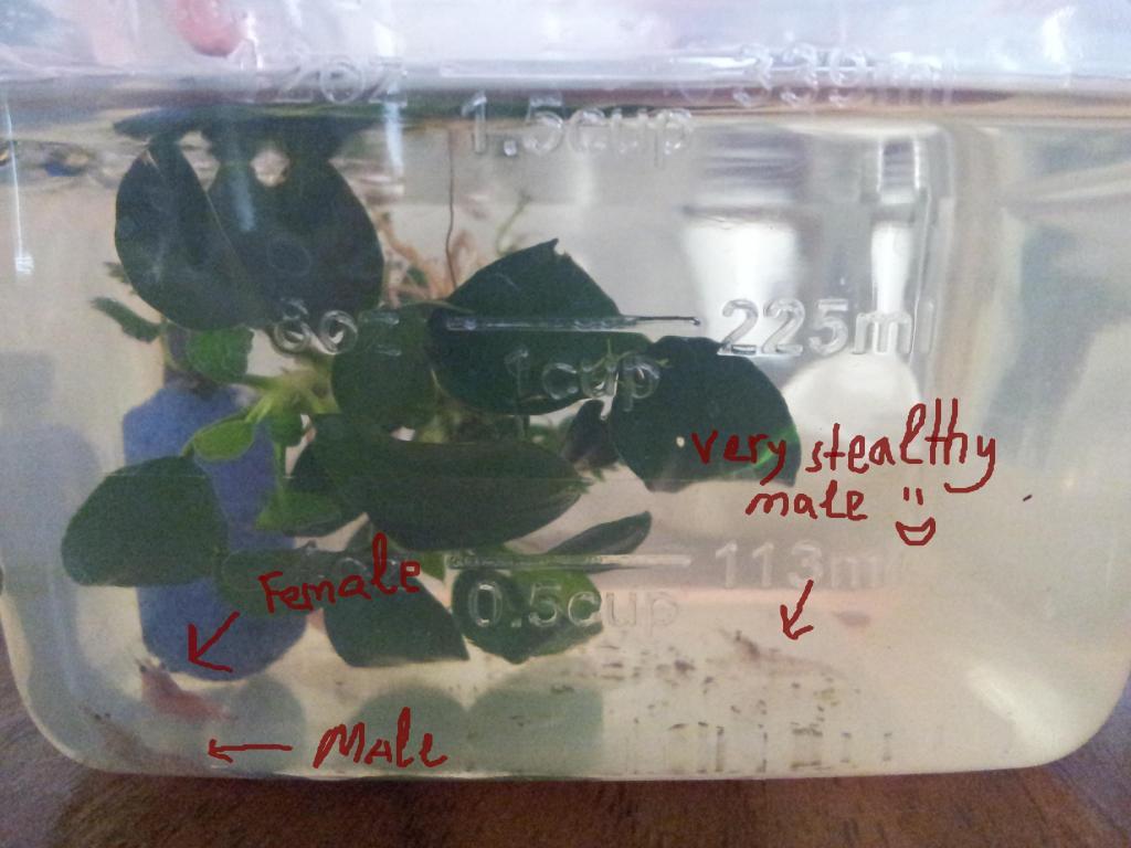Click image for larger version  Name:shrimp genders.jpg Views:40 Size:77.8 KB ID:227921