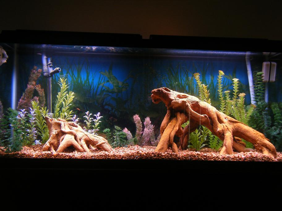 Click image for larger version  Name:Tank #1.JPG Views:183 Size:95.8 KB ID:10509