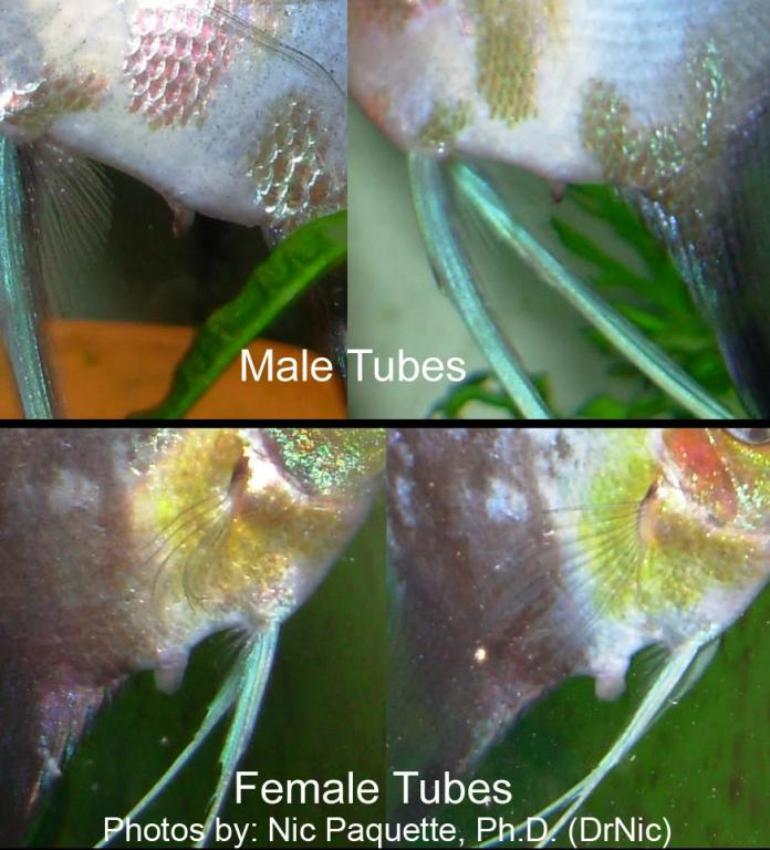 Click image for larger version  Name:tubes3.jpg Views:37 Size:72.5 KB ID:100042