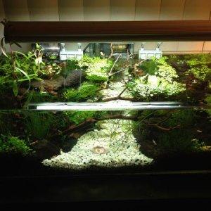 Top View of My Shrimp Tank
