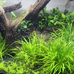 bitFUUL's Aquatic Plants:   http://bitfuul.imgur.com/