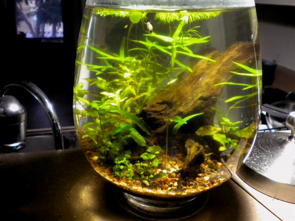 The Planted Tank Forum View Single Post List Low Tech