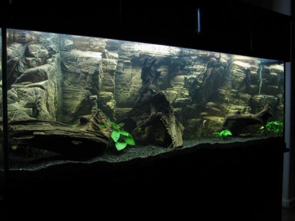 Our 155 Gallon Planted Aquarium With Aquaterra 3d