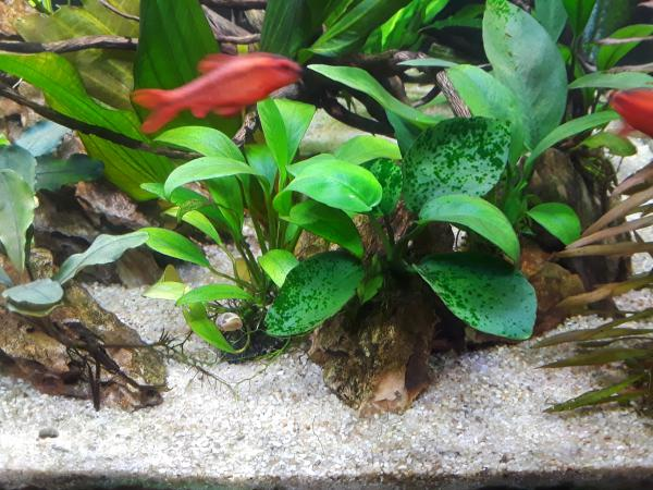 how to increase phosphate levels the planted tank forum